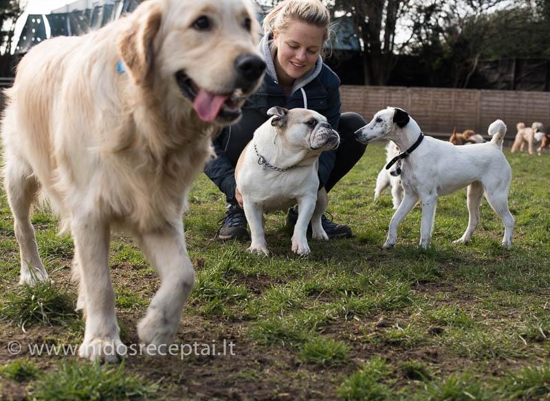 Kokių tik veislių šuniukai neateina į darželį...