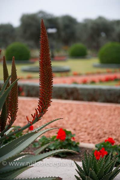 Bahaji gardens Acco-24_LR