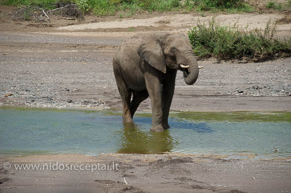 Botswana 03 24-220_LR