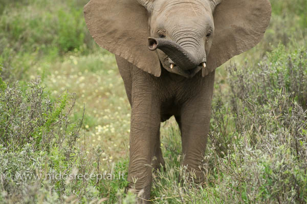 Botswana 03 25-265_LR