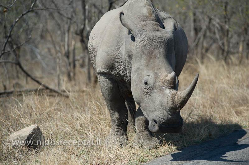 Pakeliuj, Krugerio parke