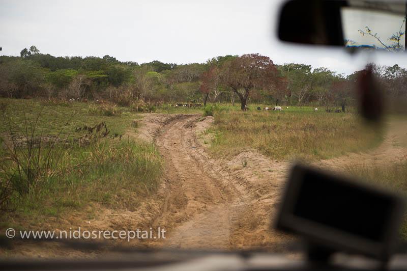 Afrikos keliai ir bekelės...