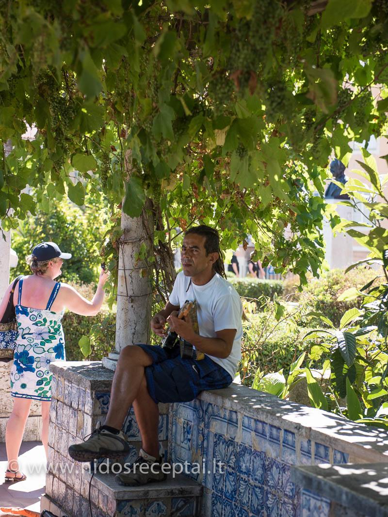 Gatvės muzikantas po vynuogių krūmu Lisabonoje